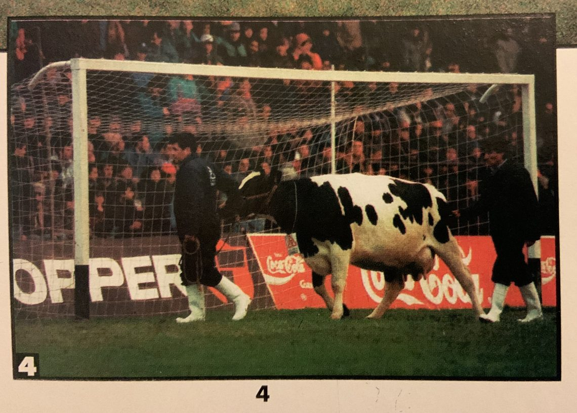 Fútbol bovino. Por Marcos Dittborn*